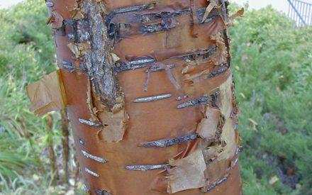 image of tree bark