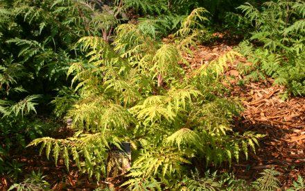 image of small tree