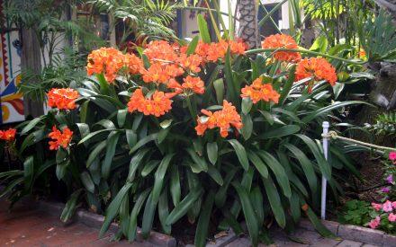 image of flowering plant