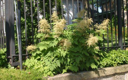 image of shrub