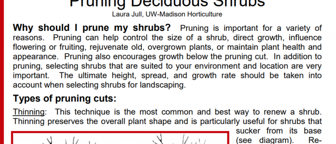 Pruning Deciduous Shrubs