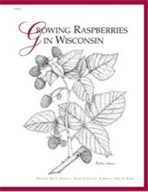 Growing Raspberries in Wisconsin