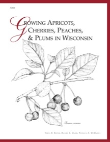 Growing Apricots, Cherries, Peaches, and Plums in Wisconsin