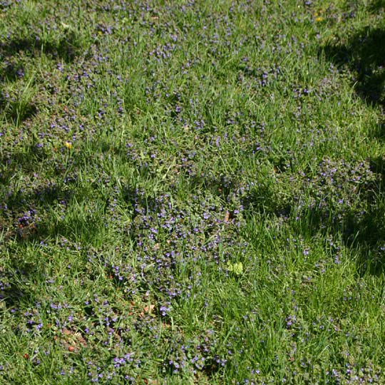 Image Result For Weed Treatment For Lawns