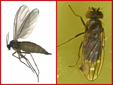 Image of insects, close up.