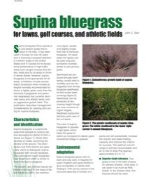 Supina Bluegrass for Lawns