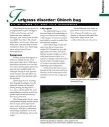 Turfgrass Disorder: Chinch Bug