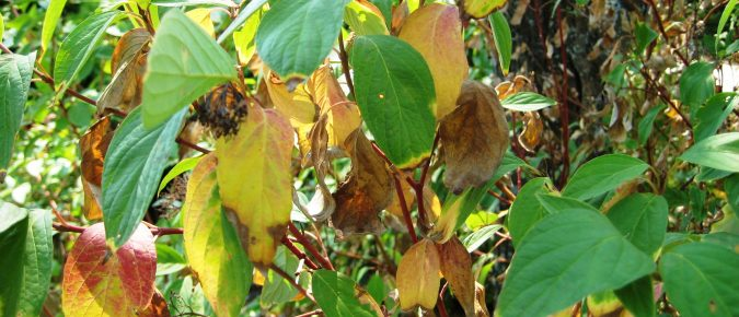 Drought and Watering of Ornamental Plants