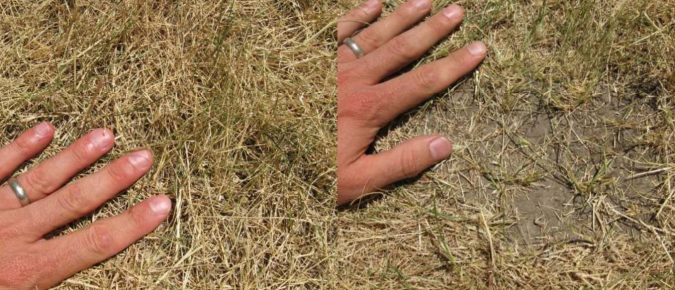 Keeping your Grass Alive During Periods of Extended Drought