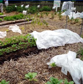 Extending the Garden Season Wisconsin Horticulture