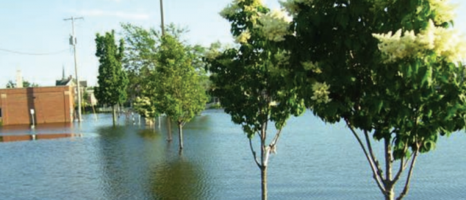 Effects of Flooding on Woody Landscape Plants