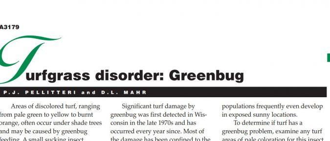 Turfgrass Disorder: Greenbug