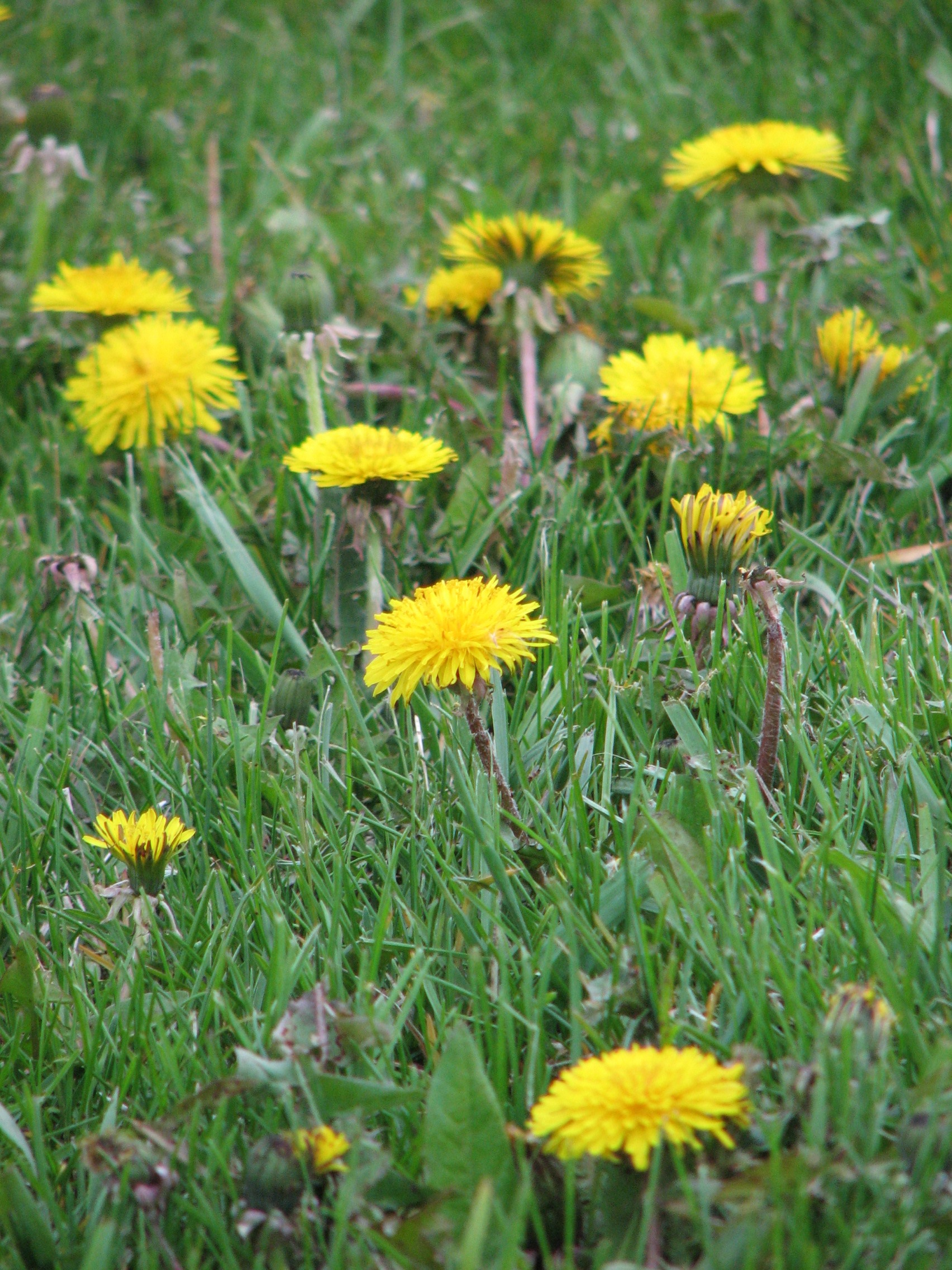lawn weed prevention and control wisconsin horticulture