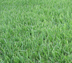 When used properly, organic fertilizers can maintain a beautiful lawn, and reuse waste products.