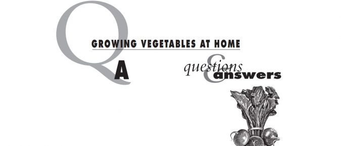 Growing Vegetables at Home: Questions and Answers