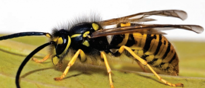 Outdoor Hazards in Wisconsin: A Guide to Insects, Plants, and Wildlife
