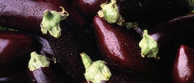 Summer Vegetables (Part 1)