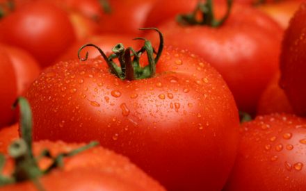 Summer Doldrums: Wilted Tomatoes in the Garden