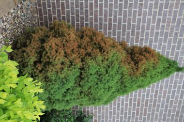 Trees Amp Shrubs Wisconsin Horticulture