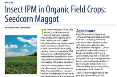 IPM Seedcorn Maggot
