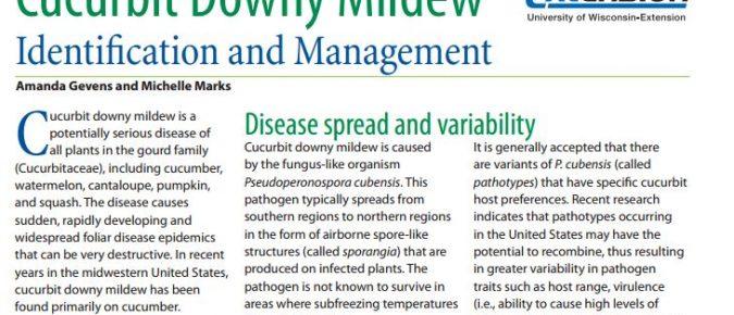 Cucurbit Downy Mildew: Identification and Management