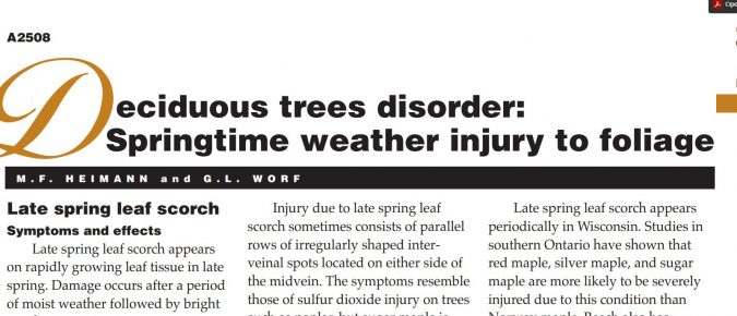 Deciduous Trees Disorder: Springtime Weather Injury to Foliage