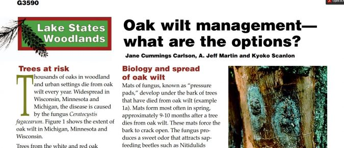 Oak Wilt Management—What Are the Options?