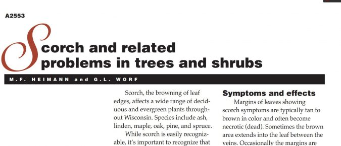 Scorch and Related Problems in Trees and Shrubs