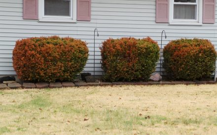 image brown shrubs