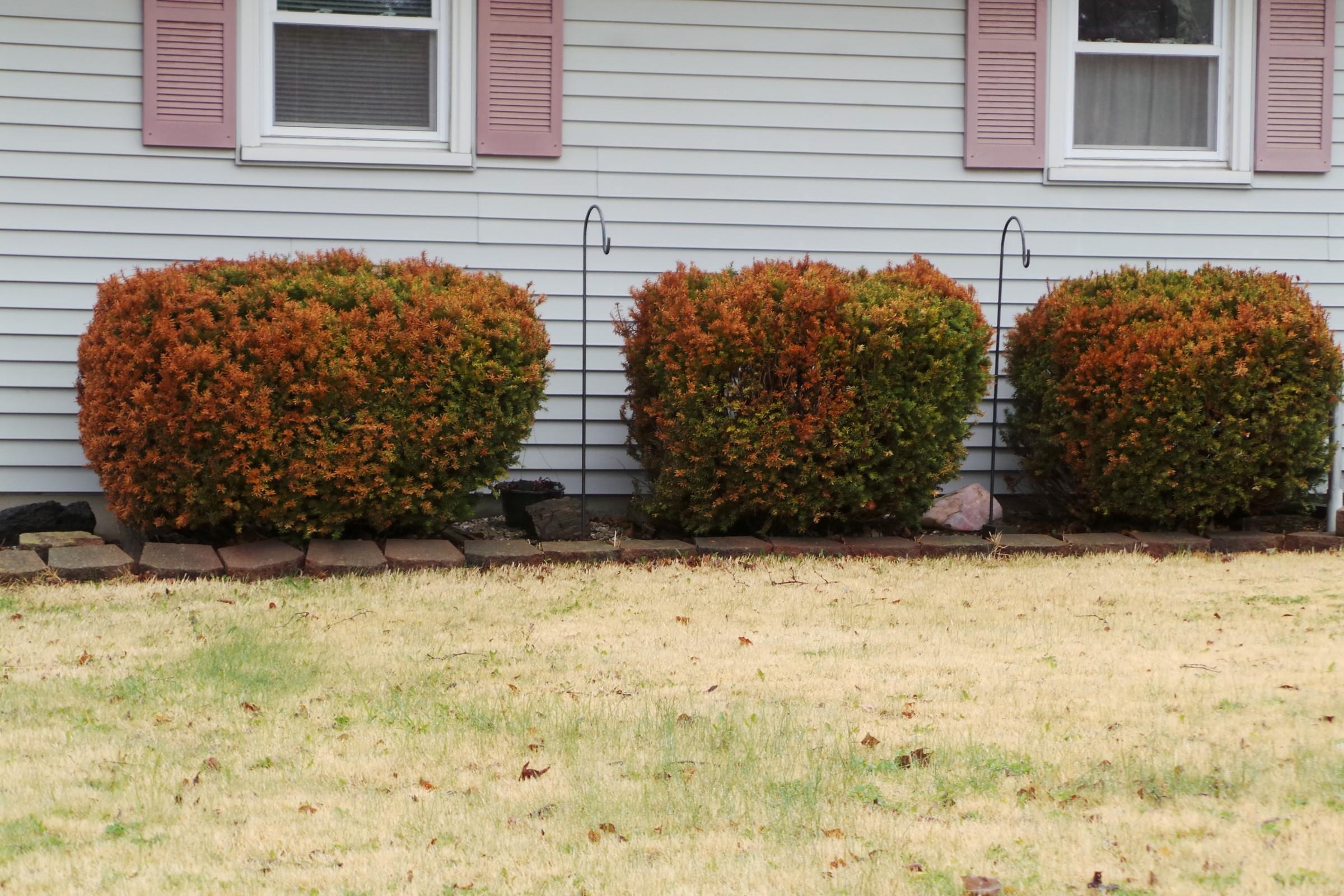image brown shrubs