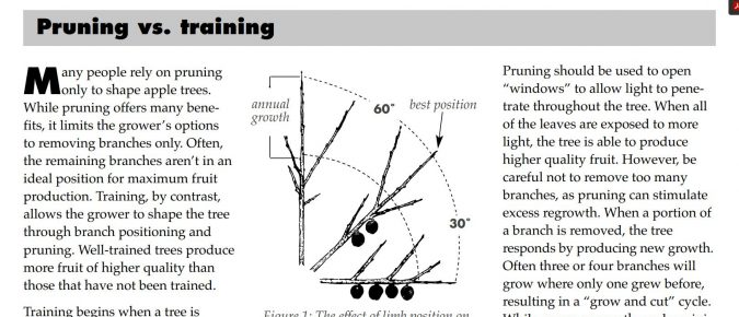 Training and Pruning Apple Trees