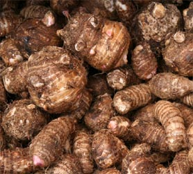 Tubers of elephant ear, Colocasia esculenta.