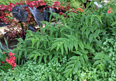 Grow toad lilies in part to full shade.