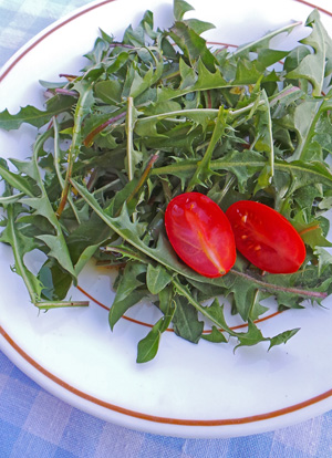 The tender young leaves make a good subsitute for other greens in salads.