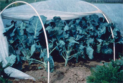 Floating row covers keep insects out