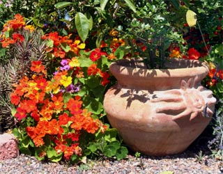 Nasturtiums are a colorful addition to the garden.