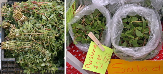 Purslane for sale as a vegetable at a Farmers Market.