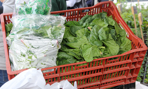 Loose leaf spinach for sale at a farmers market.
