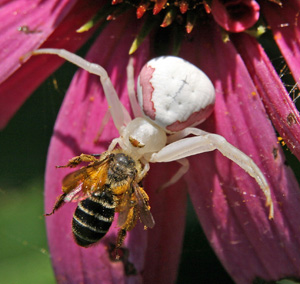 Not all flower visitors are there for the nectar!