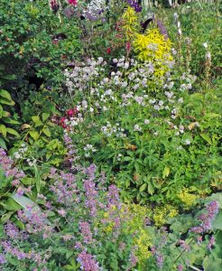 Astrantia grows best in rich soil in part shade.
