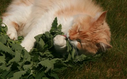 image of cat and plant