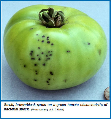 Bacterial Speck Of Tomato Wisconsin Horticulture