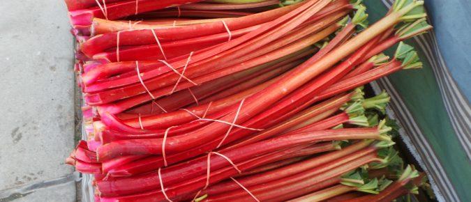 Rhubarb, Rheum rhabarbarum
