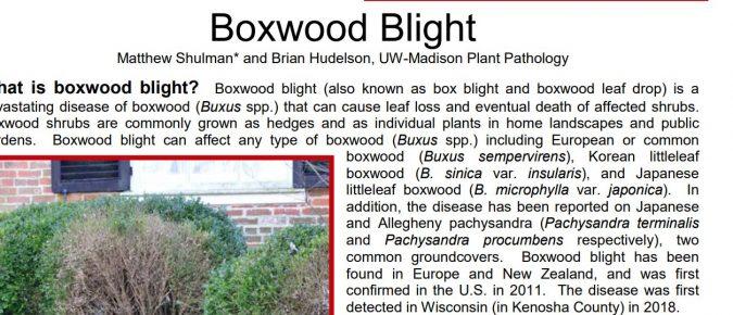Boxwood Blight