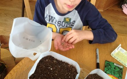 image of youth planting seeds