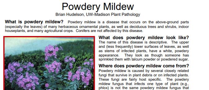 Powdery Mildew – Herbaceous Ornamental