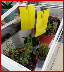 Image of yellow insect sticky traps near houseplants