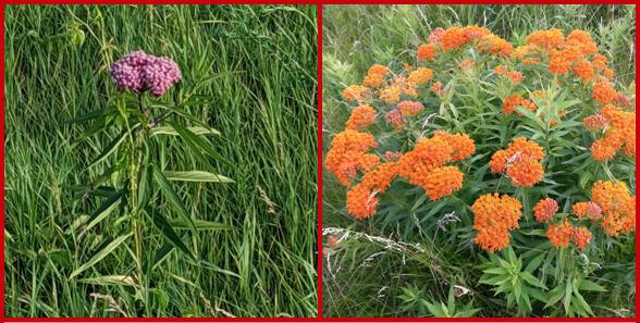 Plants that attract pollinators