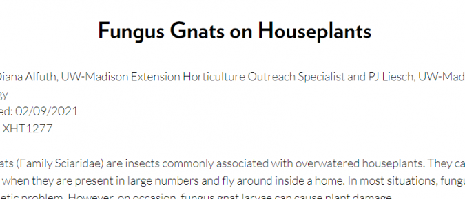 Fungus Gnats on Houseplants