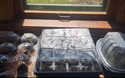 Dampening Damping-Off:  Tips on Seed Starting to Avoid Disease